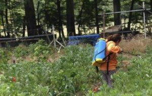 Cómo cuidar las plantas del huerto ecológico. Tipos de labores de cultivo