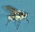 Hongos como control biológico: el terror de los bichos