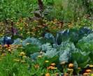 Cómo atraer Insectos Beneficiosos: Los 10 mejores trucos