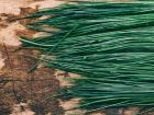 Cómo cultivar ciboulette o cebollino: Los pasos que debes seguir