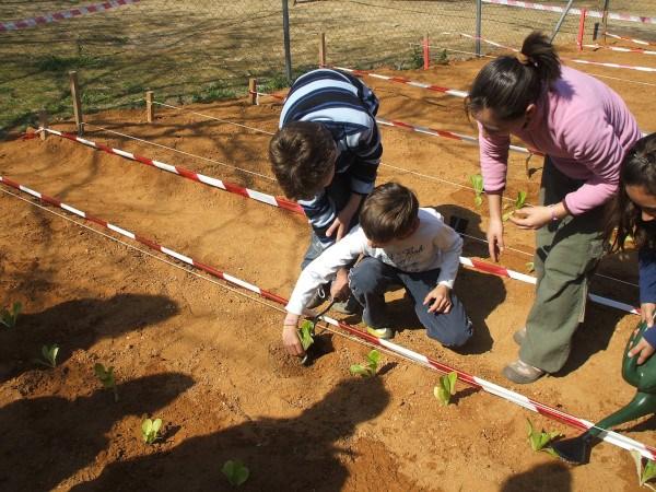 Actividades en un huerto escolar