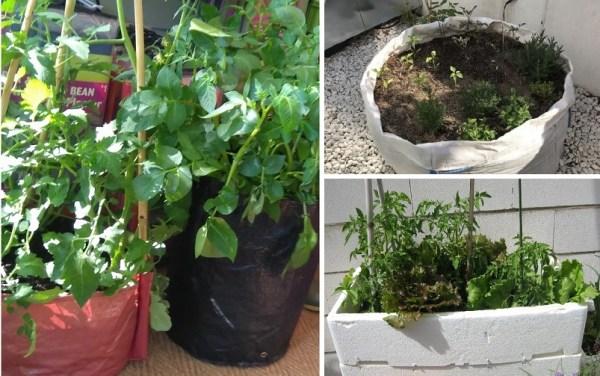 técnicas de agricultura orgánica: el reciclaje