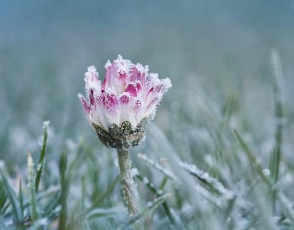 Los cambios bruscos de temperatura afectan a las flores.