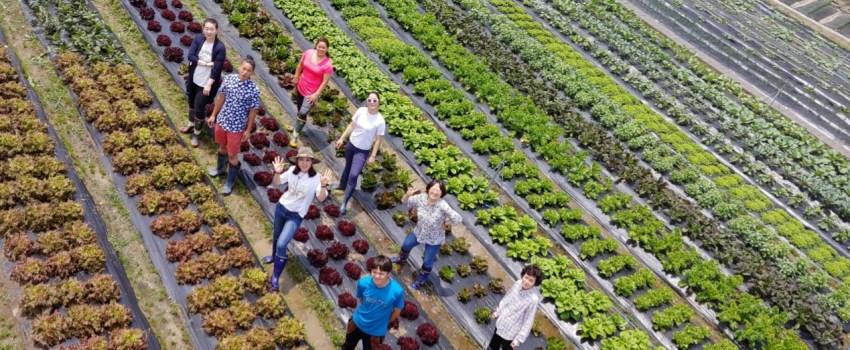 método jadam de agricultura ecológica