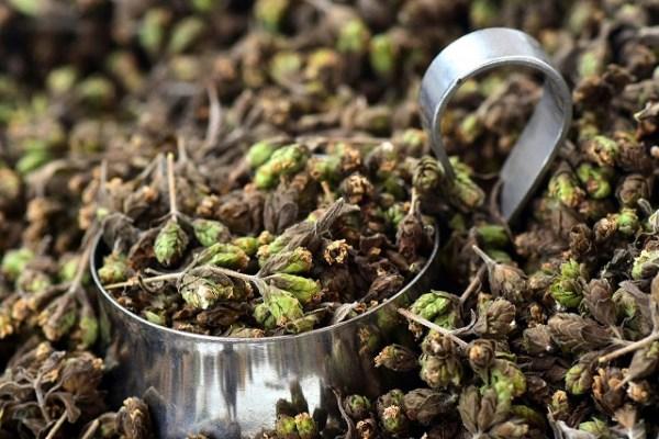 cultivar orégano en casa