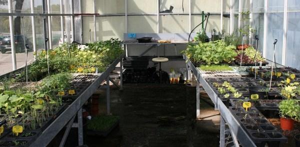 semilleros en mesas de cultivo