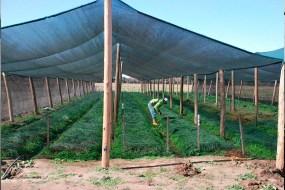 El sombreado. Cómo proteger el huerto del sol: Mallas de Sombra y otras soluciones