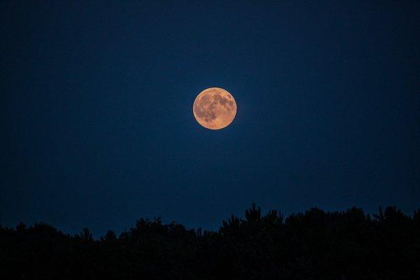 Por qué influye la luna llena en las plantas