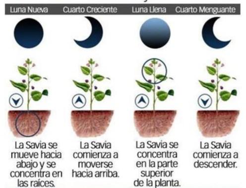 Cómo influye la luna en las plantas