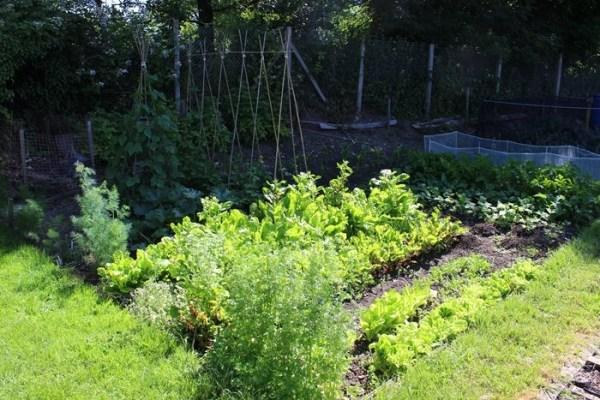 Hortalizas que se pueden plantar en un huerto en semisombra