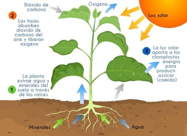 ¿Por qué las plantas necesitan luz?