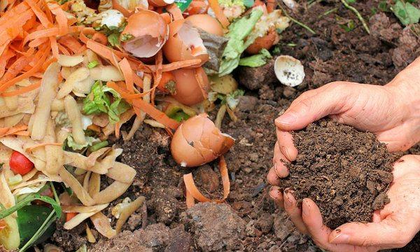 Materiales de partida y compost maduro