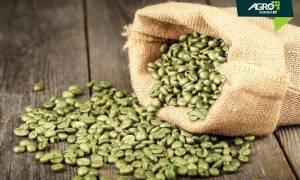 kopi hijau - agroindustri id