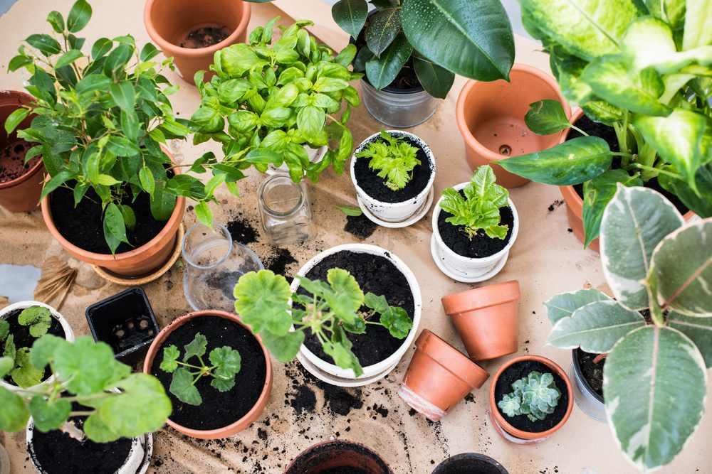 tanaman hortikulturan di dalam ruang