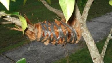 Photo of Kelebihan dan Kekurangan Dari Hasil Mencangkok Tumbuhan
