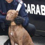 Maltratta il suo cane, denunciata 48enne