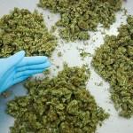 Nel suo terreno una piantagione di marijuana. Incensurato arrestato dai Carabinieri