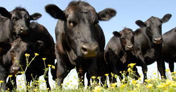 Virginia Certified Nutrient Management Plans