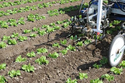 Closer view of robotic weeder blades between specialty crop rows.