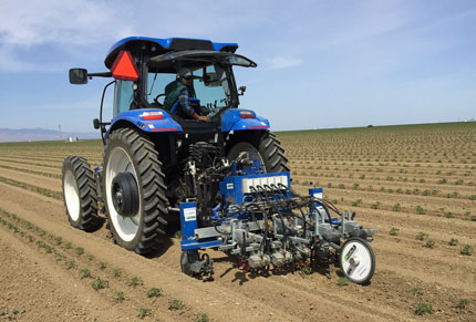 Robotic weeder attached behind tractor between rows of tomato plants