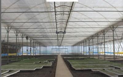 El consejo del experto: Preparaciones de suelo en invernadero