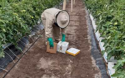 El consejo del experto: uso de colmenas