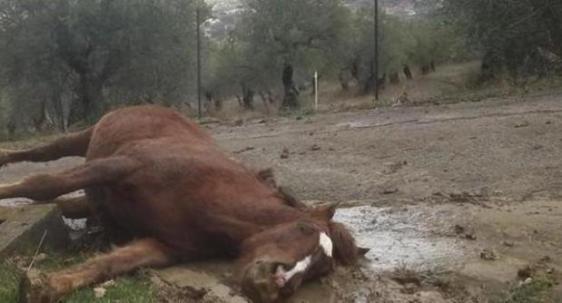 cavallo morto 1