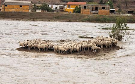 pecore_alluvione_allagamenti