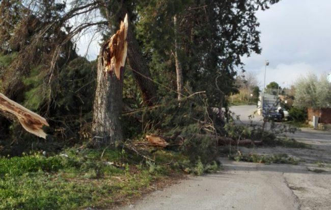 albero-caduto-650x412