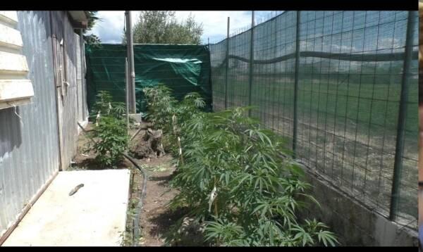 piante 1