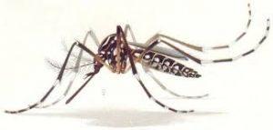 tecnica del insecto esteril
