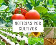 noticias-por-cultivo