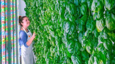granja indoor