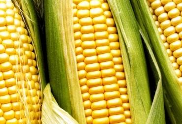Agricultores de Córdoba-Colombia, usan Machine Learning para mejorar sus rendimientos.