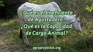 Coeficiente de agostadero y capacidad de carga animal