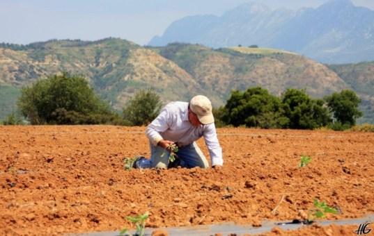 Πώς Θα Χορηγούνται Οι Βεβαιώσεις Για Το Μητρώο Αγροτών