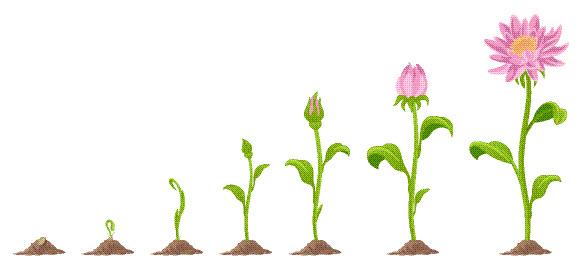 4 Faktor Yang Mempengaruhi Pertumbuhan Tanaman