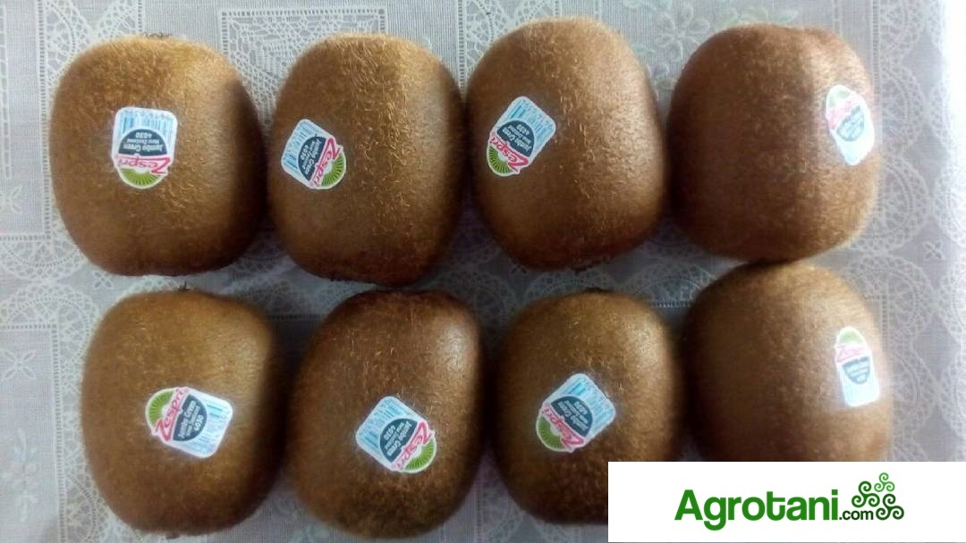 buah-kiwi-agt
