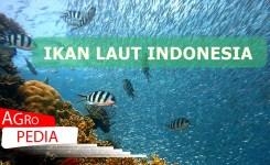 IKAN LAUT INDONEIA