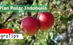 Buah indonesia