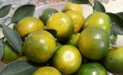 buah-jeruk-yang-cocok-ditanam-di-pekarangan
