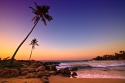 Sunset on Beach with Coconut Trees, Sri Lanka