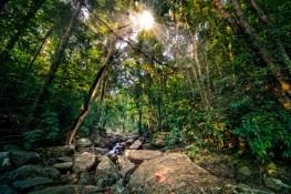 Sri Lanka Jungle