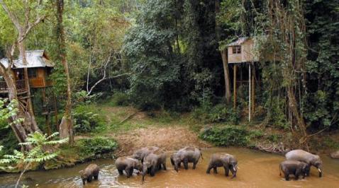 Xishuangbanna Elephants