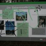 32-Rabeninsel Ostteil Schautafel An Brücke Zu Böllberger Weg