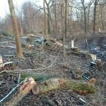 2a-Abholzungen Wehricht Wald