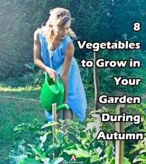 A woman doing autumn gardening and watering plants