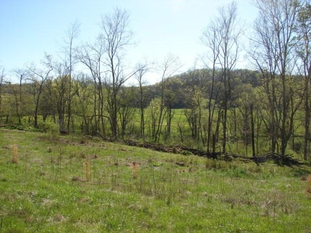 Big Creek view