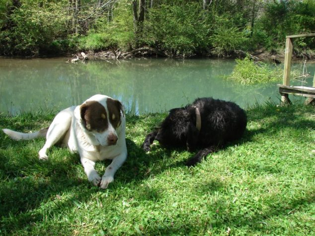 Rocky and Lucy, hanging by the creek. I think they're an item.
