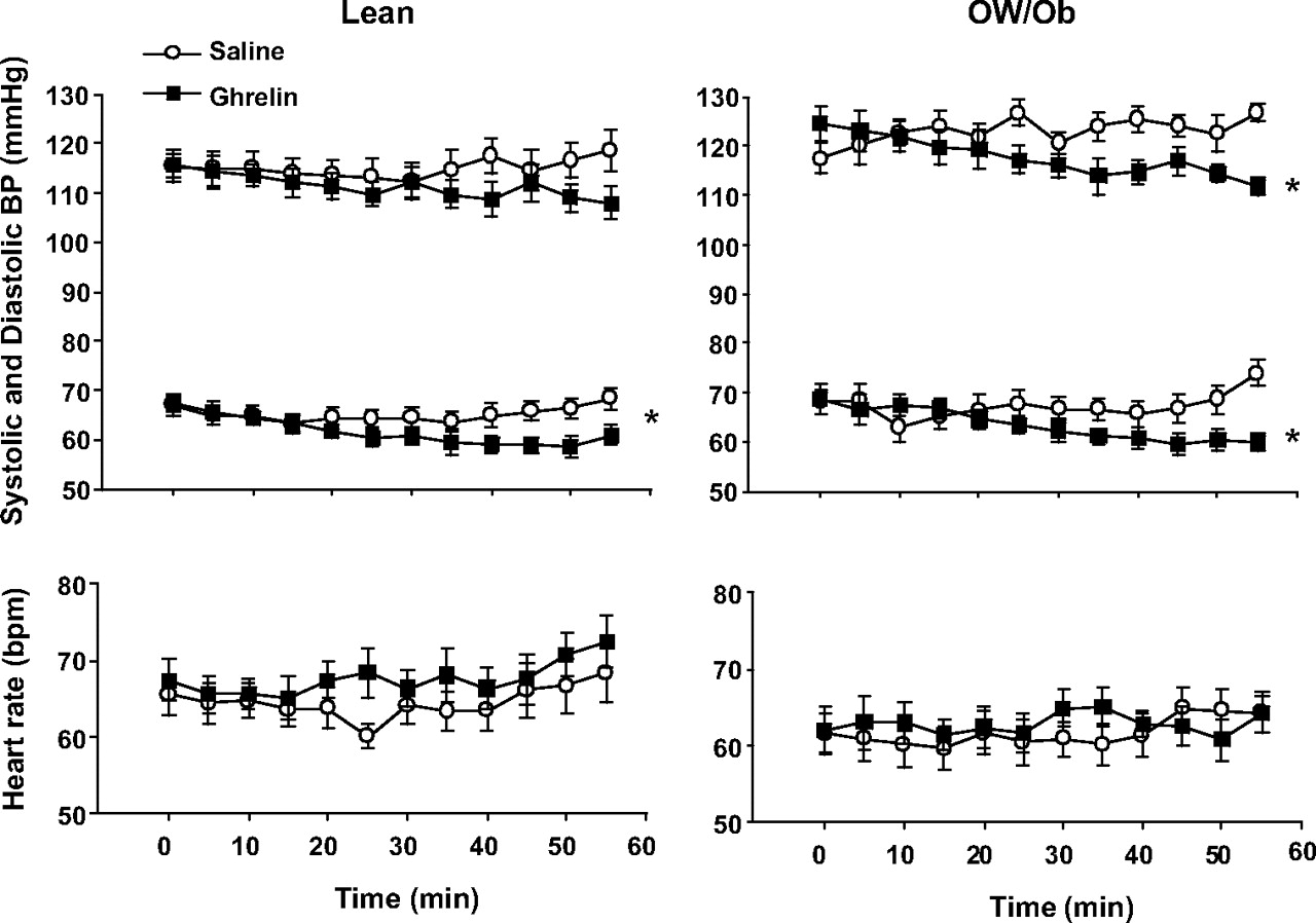 Ghrelin Modulates Sympathetic Nervous System Activity And Stress Response In Lean And Overweight